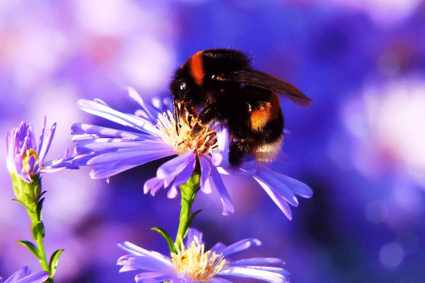 Ogród przydomowy w ochronie owadów zapylających