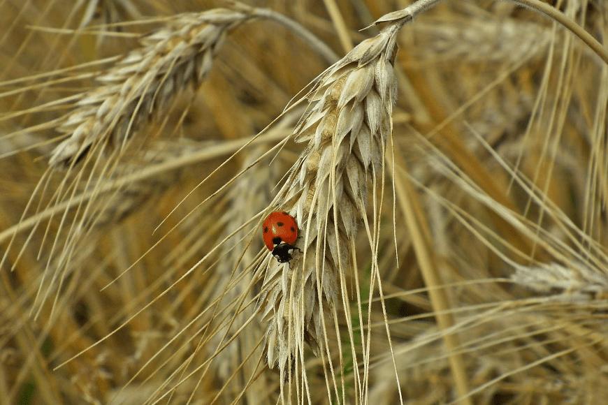 Co to są programy rolnośrodowiskowe?