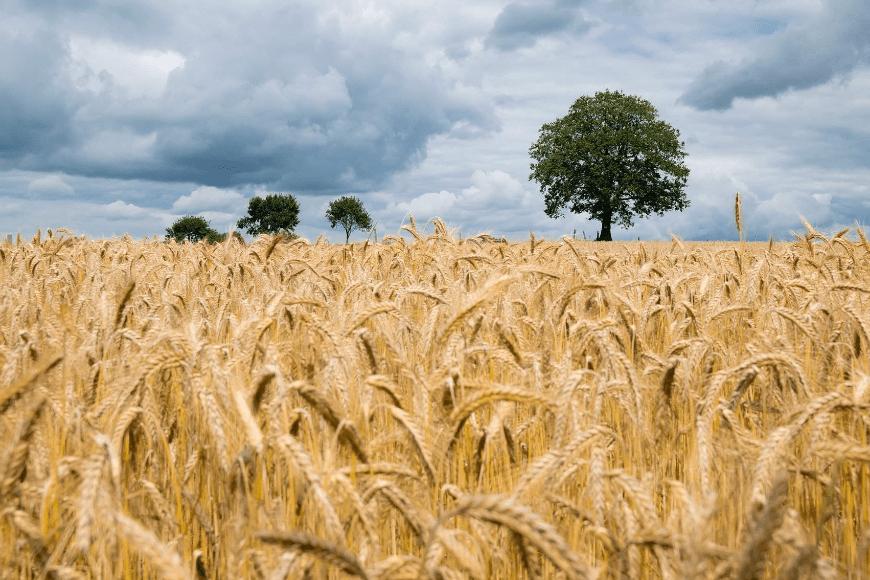Filozofia rolnictwa ekologicznego